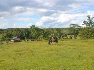 Accès à l'électricité pour les communautés éloignées dans la Réserve Écologique de Mahogany