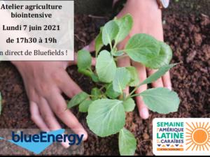 Rencontre en ligne sur l'agriculture biointensive 🌱